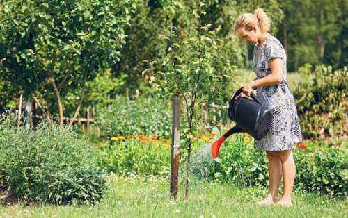 Если почва будет перенасыщена влагой, то высока вероятность получить потрескавшиеся плоды, не пригодные к употреблению , Компостная яма своими руками без хлопот, без сложных сооружений
