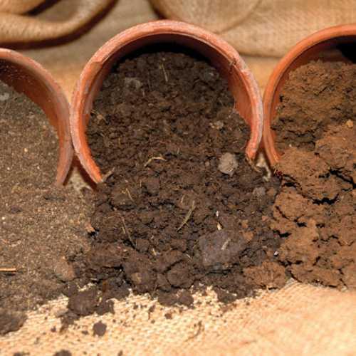 Какая почва лучше