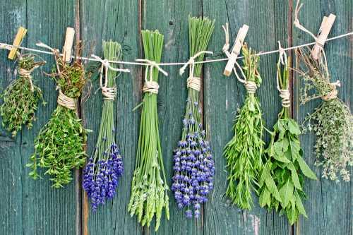 Также в горшочках можно выращивать и многие лекарственные травы