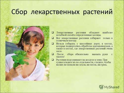 Как правильно заготавливать лекарственные растения