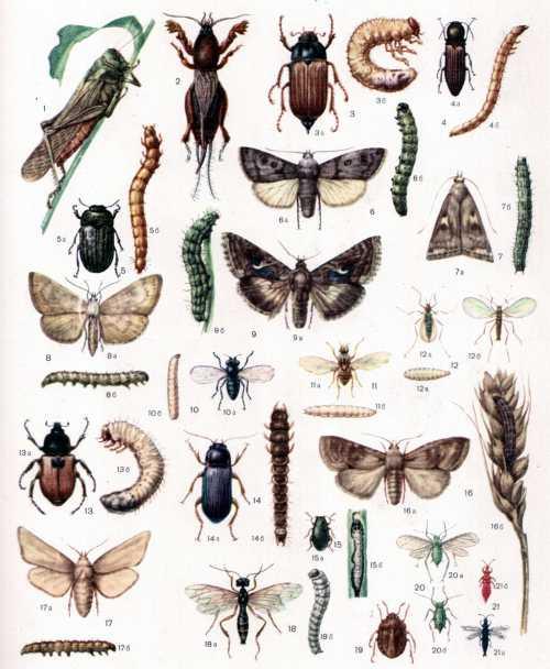 Краска не несет вреда растению, но смертельна для насекомых и содержит в своем составе большое количество инсектицидов, фунгицидов и других химических компонентов