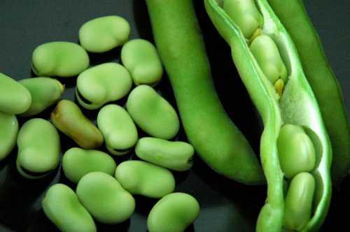 Овощные бобы огородные культуры бобовые