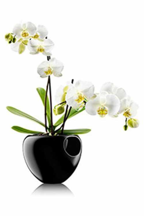 Выбрать горшок для орхидеи