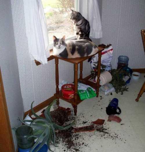 Кошка одна дома