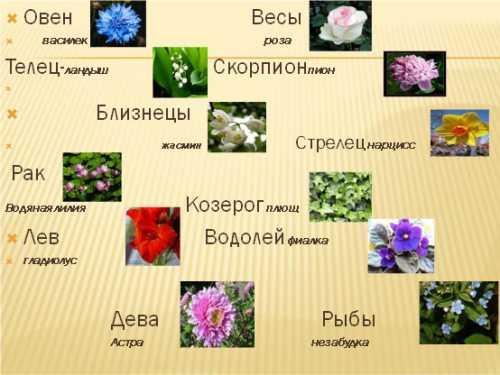 Домашние цветы и ваш знак Зодиака