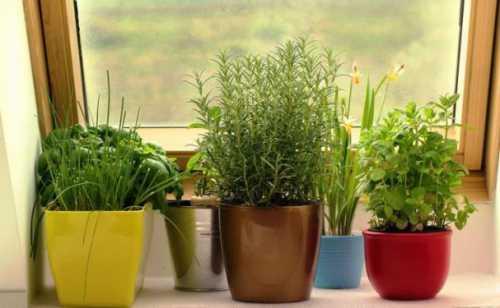 Витаминизируемся: как вырастить зелень на подоконнике