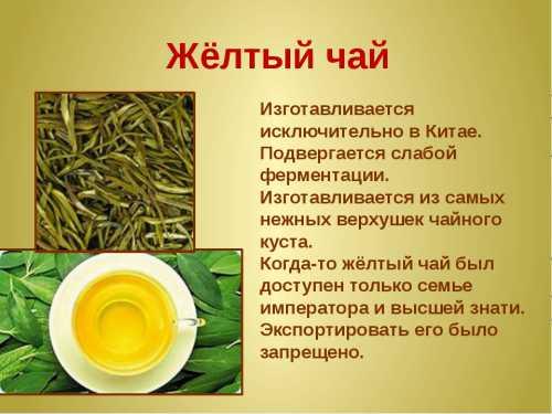 Белый чай Свойства и рекомендации