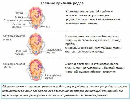 Также беременная женщина может пронаблюдать и за другими признаками начала появления родов за дня до схваток у нее отошла слизистая пробка появились небольшие подтекания околоплодных вод или их бурное излияние