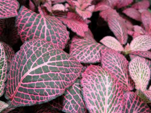Доза должна быть половинной от рекомендованной для других растений